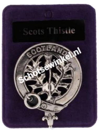 Scots Thistle